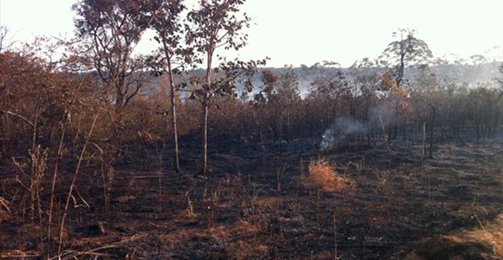 Estado de emergência por risco de queimadas é decretado no DF